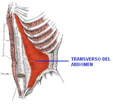 Fisioterapia-Transverso Adbomen